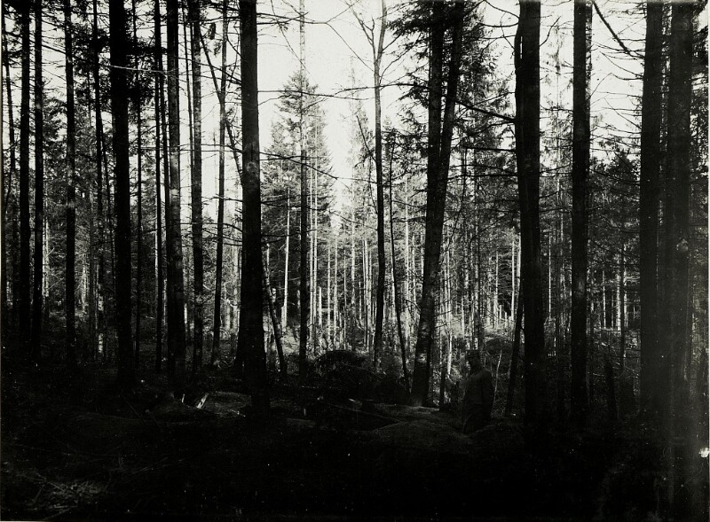 Artilleriewirkung im Wald nördlich Bolechow.