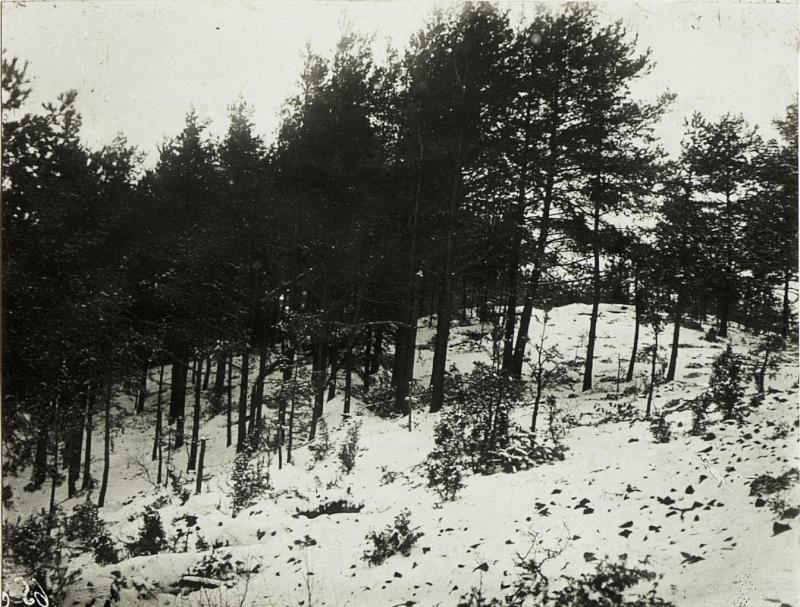 Auf der bewaldeten Kuppe bei Orlowka.