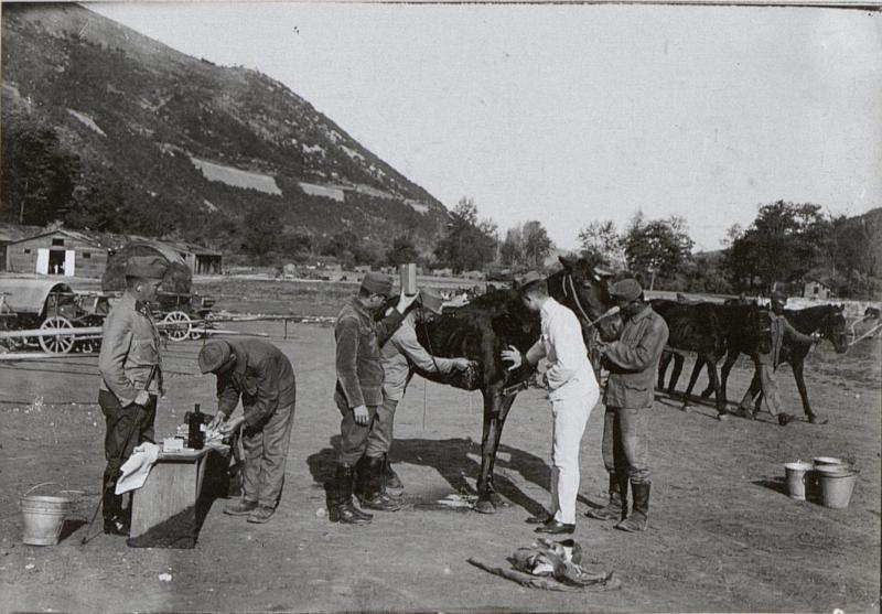 Behandlung eines schwerverwundeten Pferdes. 3.9.17.