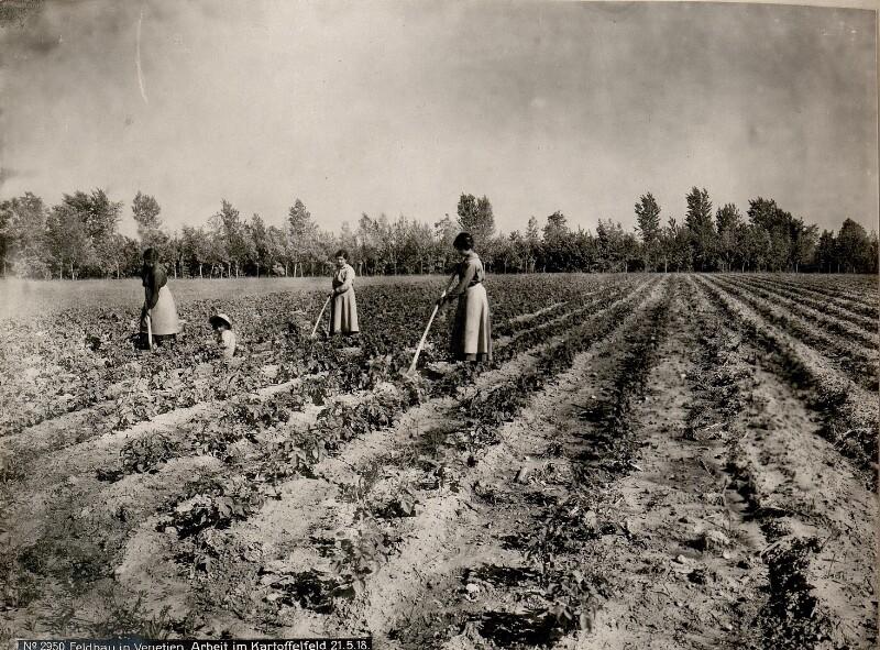 Feldbau in Venetien. Arbeit im Kartoffelfeld 21.5.18.