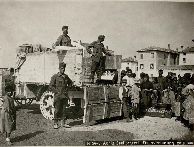 Adria Seefischerei. Fischverladung. 20.8.1918.