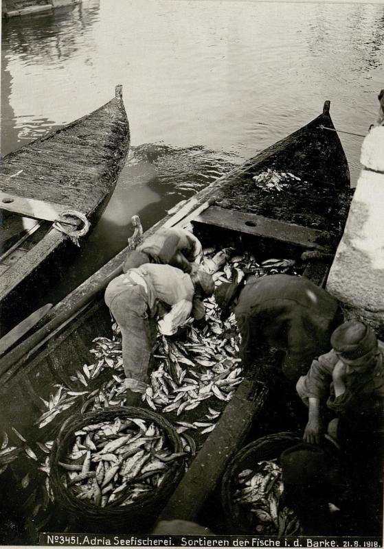 Adria Seefischerei. Sortieren der Fische in der Barke.