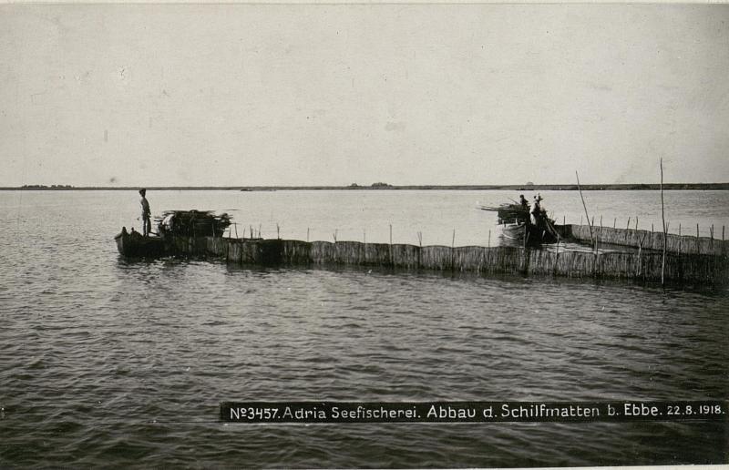 Adria Seefischerei. Abbau der Schilfmatten bei  Ebbe.