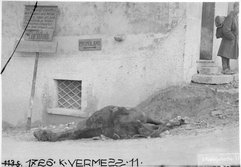Enego.Von einer italienischen Granate getroffenes Pferd.