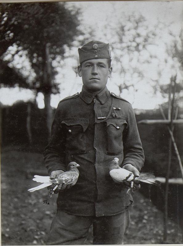 Brieftauben vom II.Bataillon Infanterieregiment No.1.