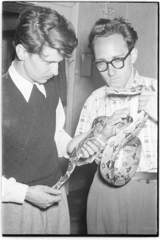 Zwei Männer halten eine Riesenschlange. Wiener Schlangenfänger Weis und Litschauer vor ihrer Abfahrt nach Afrika von Scheidl