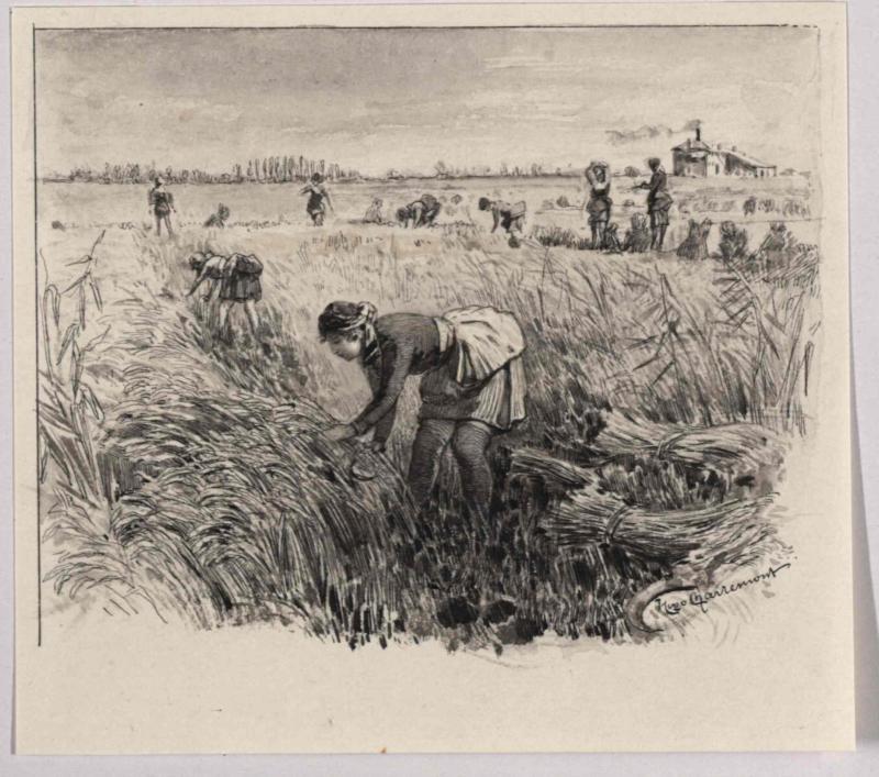 Reisernte bei Aquileja (Schnitterinnen) von Charlemont, Hugo