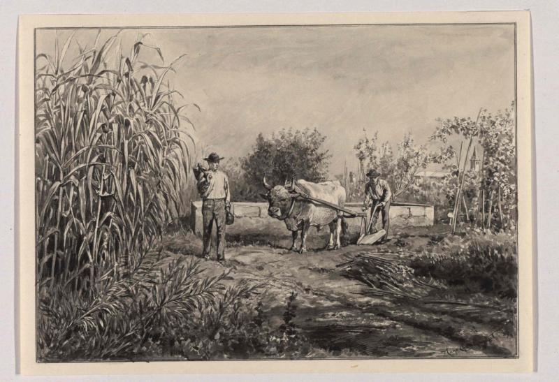 Anbau von Wein und Schilfrohr in Parenzo (Istrien) von Charlemont, Hugo