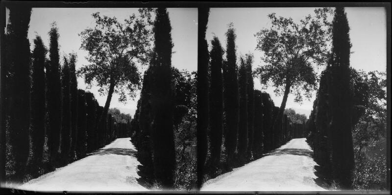 Zypressenallee im Generalife in Granada, Spanien