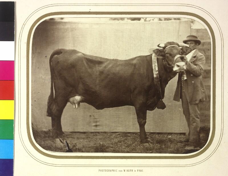 Kuh von Horn, Wilhelm