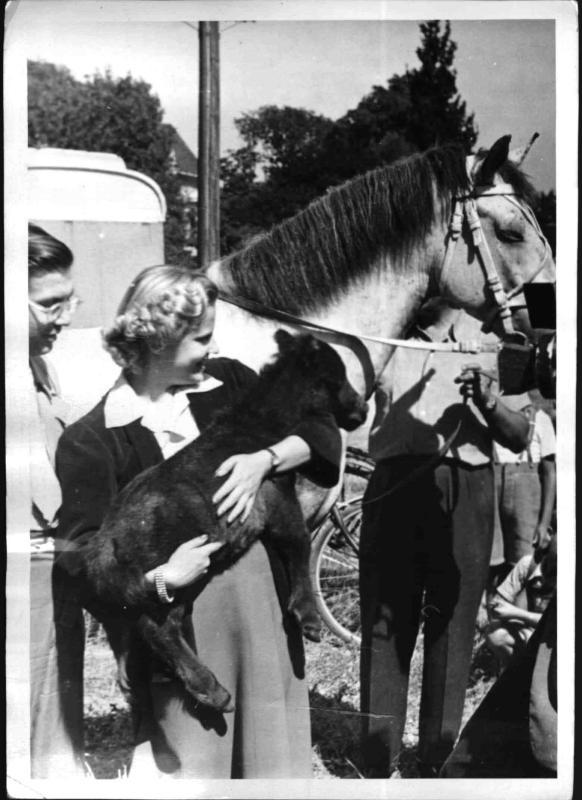 Geburt des kleinsten Pferdes der Welt von Hilscher, Albert