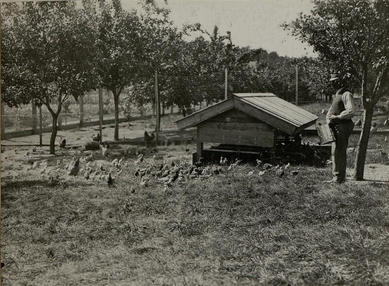 Hühnerhof in LIND. Aufgenommen am 16. Juli 1916. von K.u.k. Kriegspressequartier, Lichtbildstelle - Wien