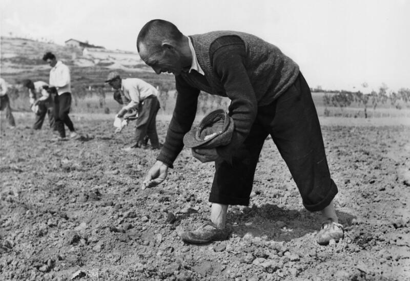 Um bessere Feldfrüchte zu ernten, hat die Türkei Amerikanisches Hybridkorn importiert. Anatolia, Türkei. von Lessing, Erich