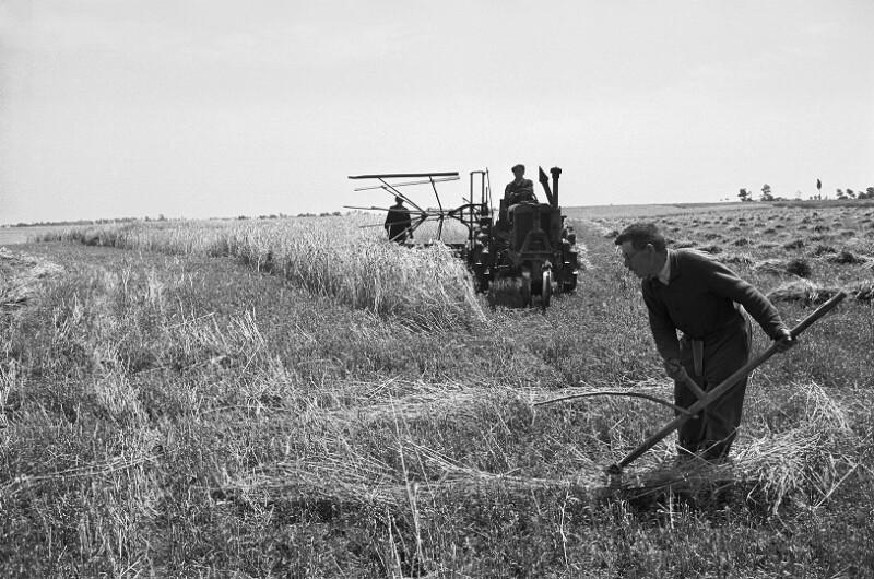 Erntearbeiten an einem Bauernhof an der Puszta von Lessing, Erich