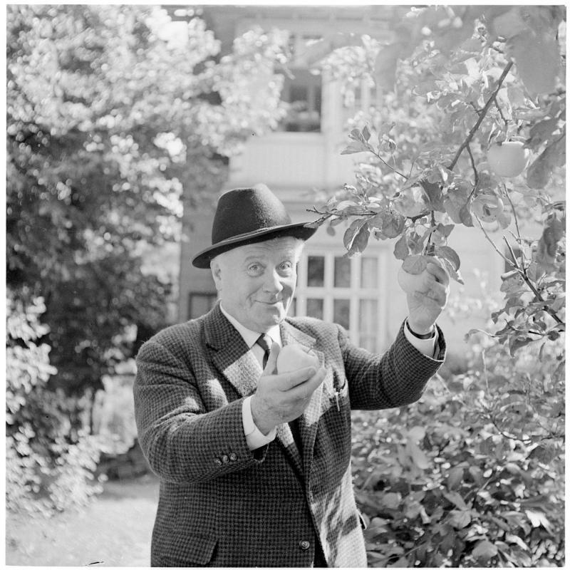 Burgschauspieler Hermann Thimig beim Äpfel-Plücken. von Scheidl