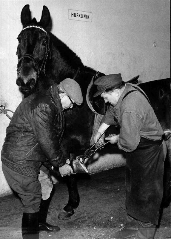 Tierärztliche Hochschule, Hufklinik, zwei Männer beschlagen ein Pferd mit neuen Hufen, dahinter ein Schild 'Hufklinik'