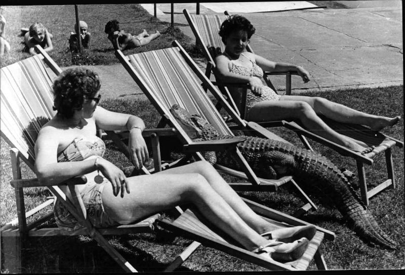 Hietzinger Bad, der Alligator Jockl liegt in einem Liegestuhl und sonnt sich, neben ihm liegen zwei Frauen, im Hintergrund einige Kinder