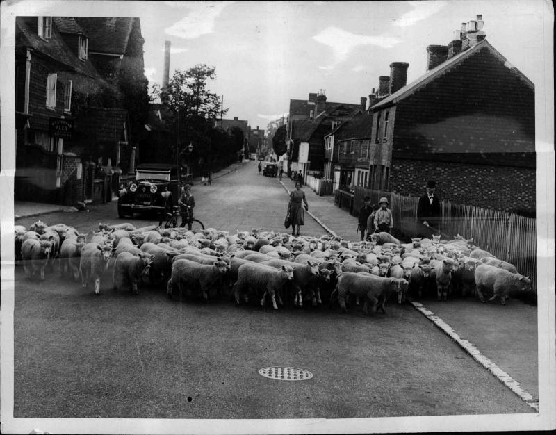 Kent Village Eine Straße mit Häusern am Rand, mitten auf der Straße steht eine Herde von Schafen, Autos und Radfahrer müssen halten, ländliche Idylle von New York Times Photo