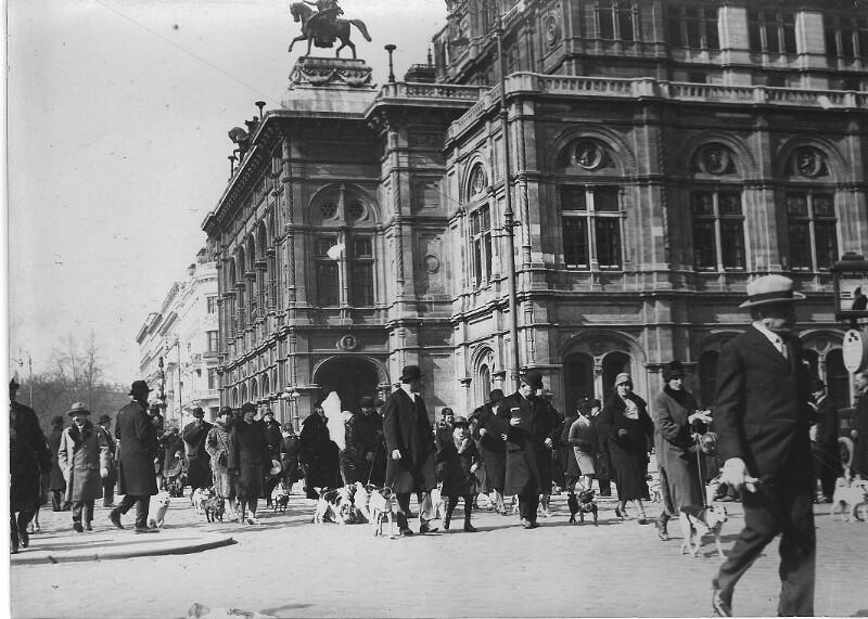 Hundeschau vor der Wiener Staatsoper von Hilscher, Albert