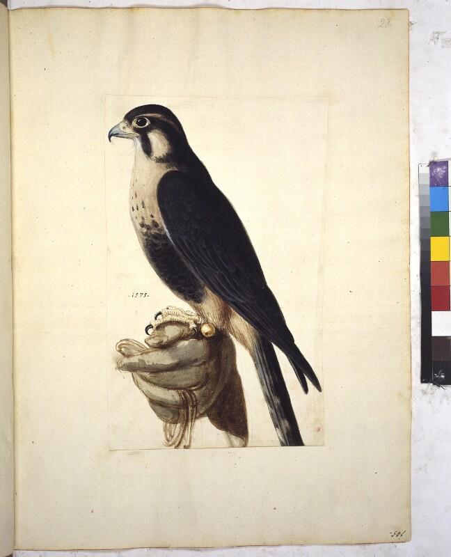 Cod. Min. 42, fol. 28r: Sammlung von Naturstudien u. a. von niederländischen, deutschen und italienischen Künstlern