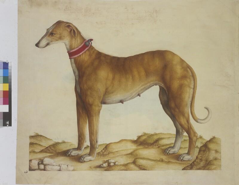 Cod. Ser. n. 2669, fol.6r: Meeresfauna des Adriatischen Meeres: Hund